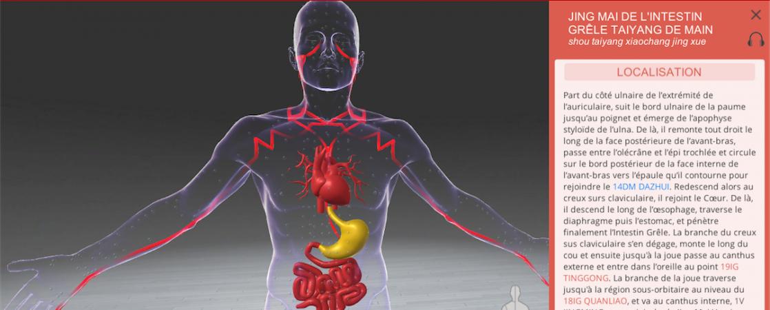 Associated organs